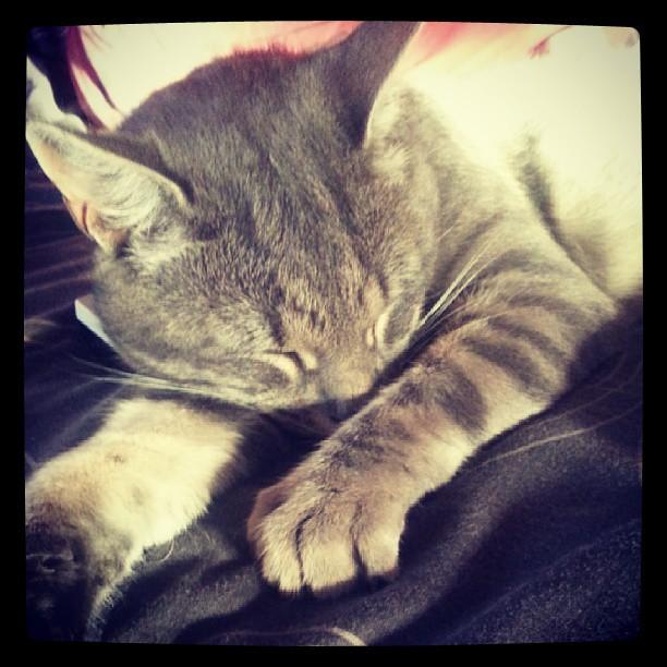 Pauvre Hihi, Ikea ne veut pas jouer avec lui. Snif #chat #cat #blog #blogueuse #ourlittlefamily #france