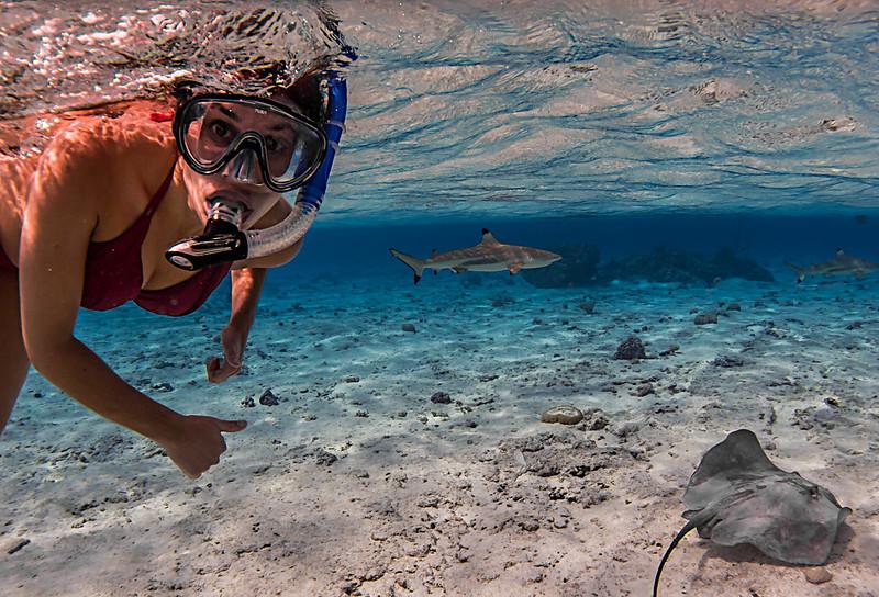 Shark & Ray Feeding - Bora Bora