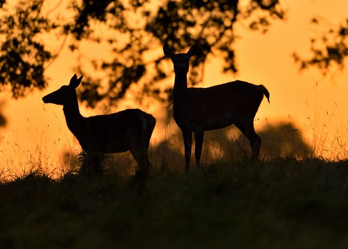 Silhouettes at Dawn by Andy Pritchard - Barrowford