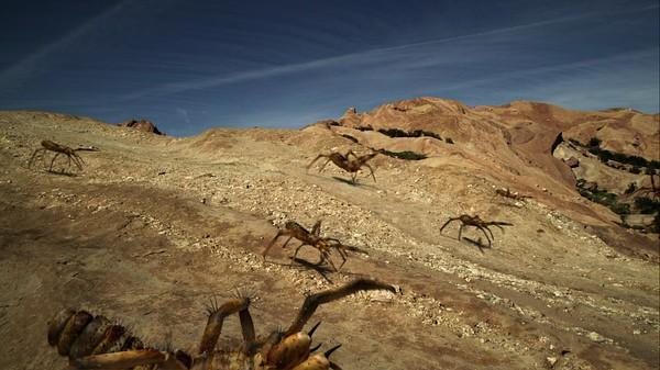 骆驼蜘蛛 食人巨蛛