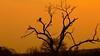 South Africa Sunrise by José Rambaud