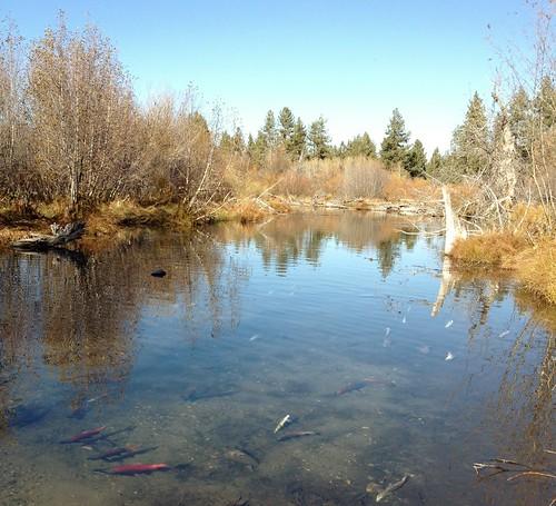Taylor Creek, Lake Tahoe