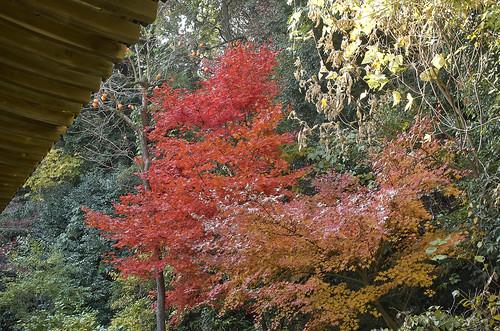 【写真】2013 紅葉 : 浄瑠璃寺/2019-08-22/IMGP3536