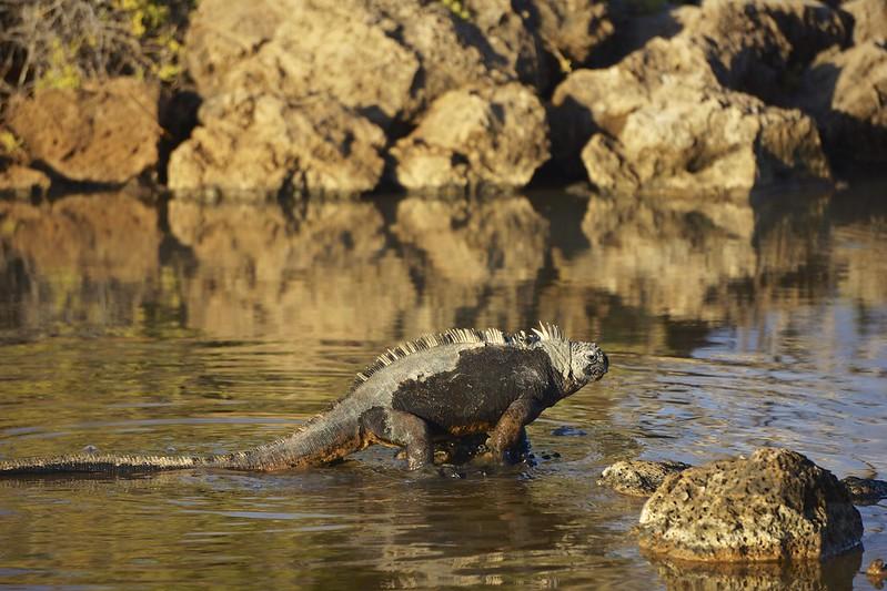 galapagos rabida cerro dragon 189