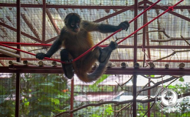 Monkey Jaguar Rescue Center