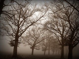 December misty morning (3)