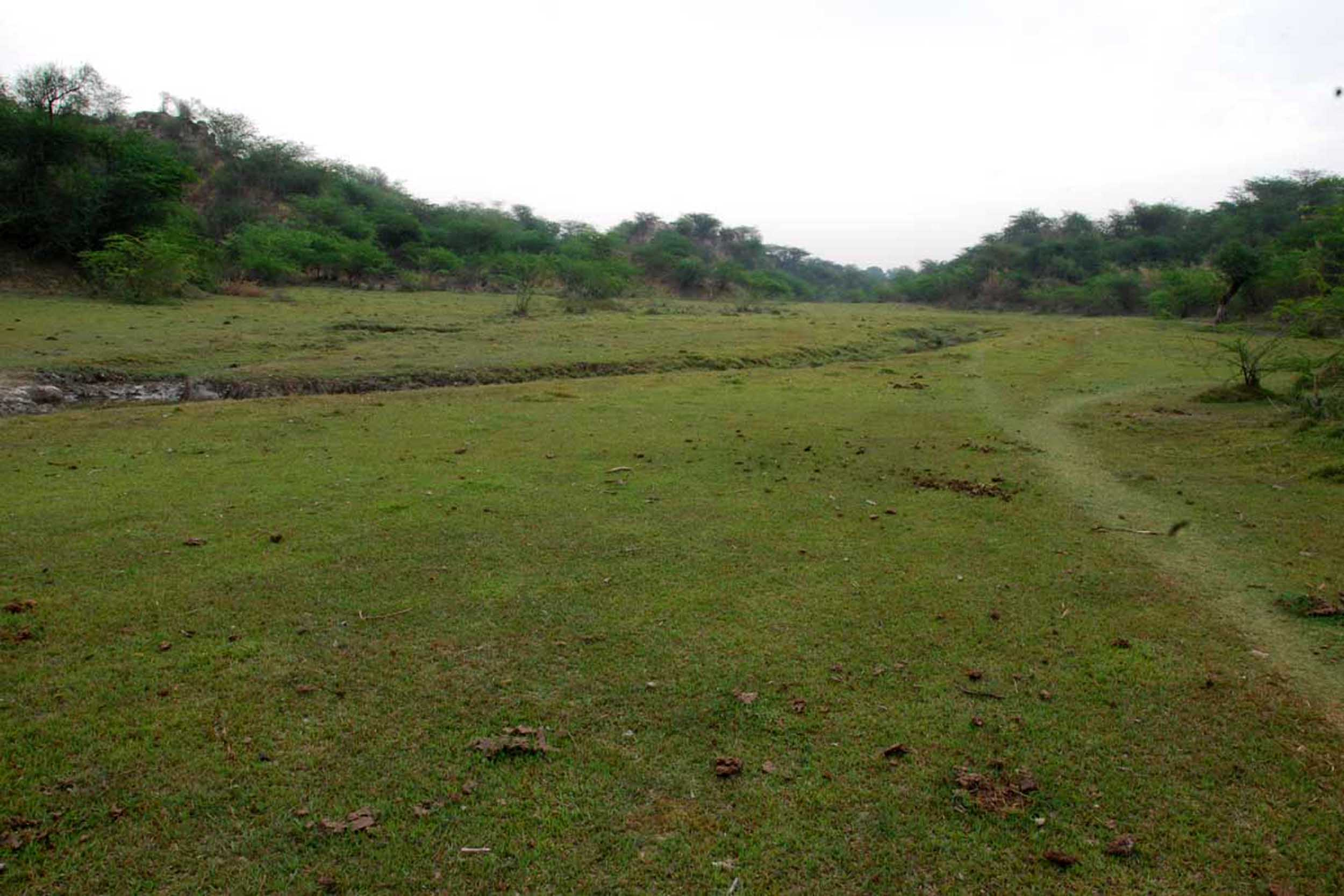 चंबल के बीहड़ में हरी-भरी हरियाली