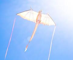 kite sports, wing, sports, windsports, line, wind,