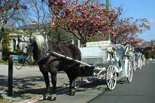 Horse Carriage in James Bay, Victoria, Vancouver Island, British Columbia, Canada