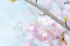 WEB-LR_20140304_0066-2.jpg