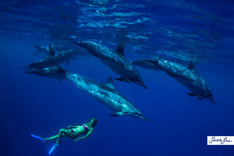 hawaii_underwater_dolphins_018.jpg