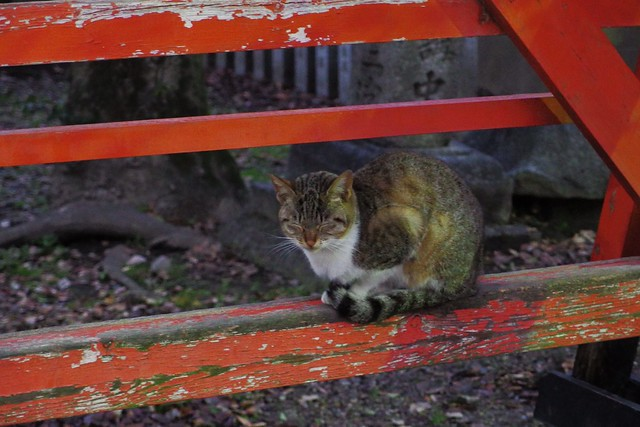 Today's Cat@2017-02-06