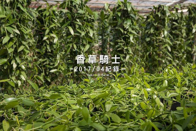【台灣香莢蘭】香莢蘭園種植(波本種香草莢)紀錄-Vanilla Farm@香草騎士