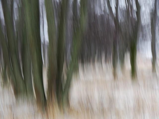 Trees, Sony DSC-HX9V