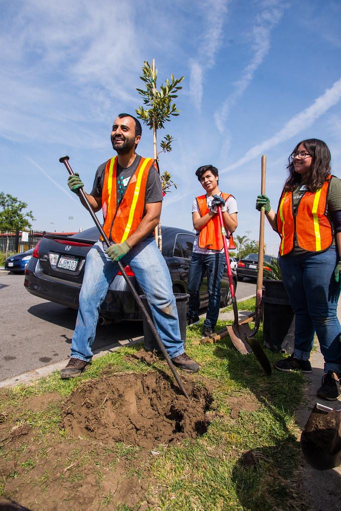 Huntington Park Planting