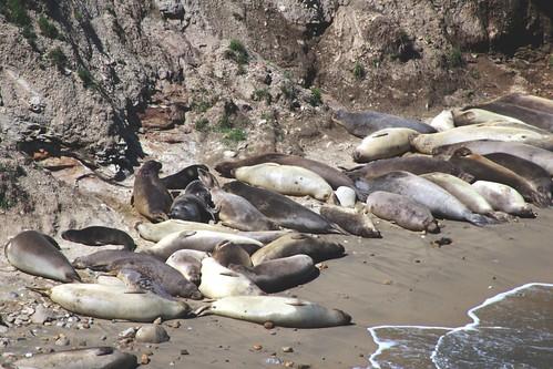 Seals #2