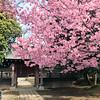 Photo:普光明寺 in Niiza, Saitama By cyberwonk
