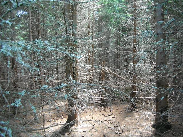 forest of dreams, Fujifilm FinePix XP30