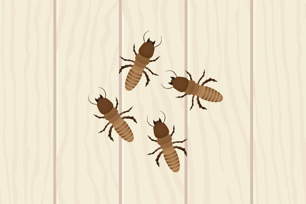 Termites - Termite damage