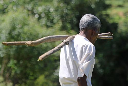 srilanka people man farm paddy field paddyfield worker stick