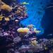 Vita sottomarina by angelofr.gambino