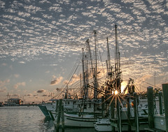 Shrimp Boats,  Gulf Coast