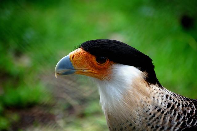 Bird at the zoo, Nikon D40, AF-S DX Zoom-Nikkor 55-200mm f/4-5.6G ED