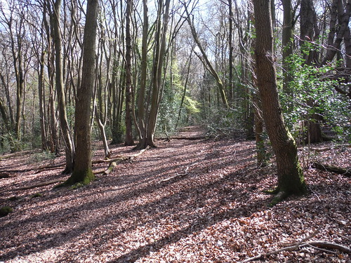 Courns Wood