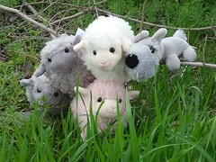 Terry Jesus and the Sheepies