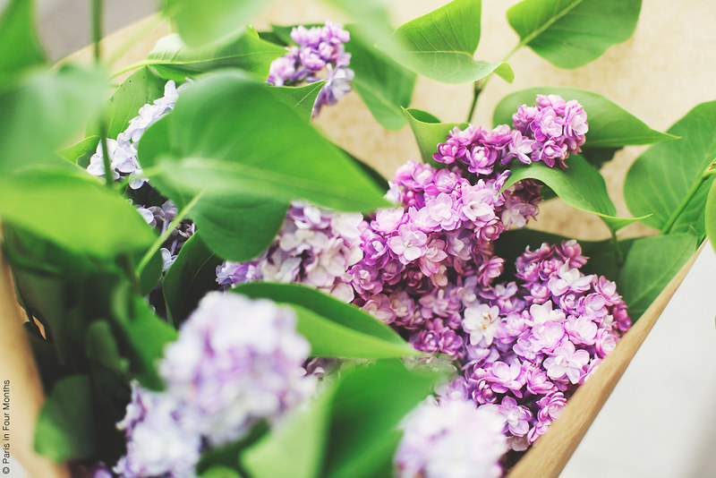 Favourite Lilacs by Carin Olsson (Paris in Four Months)