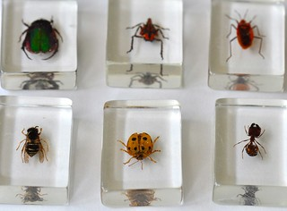 Real Bugs in Glass