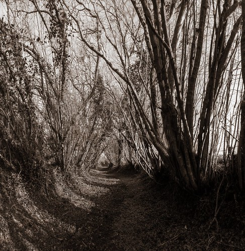 trees france nikon brittany bretagne breizh hazel paths d300 chapelleneuve lachapelleneuve restougouin