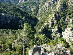 Sur la crête de Quarcitellu (1ère branche) : en surplomb du Finicione