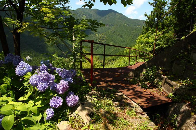 IMG_8179_6-16 Ikegawa Wandering