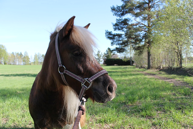 Poni kuvat 2013 133
