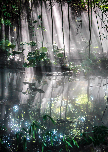 Jungle Mist from Flickr via Wylio