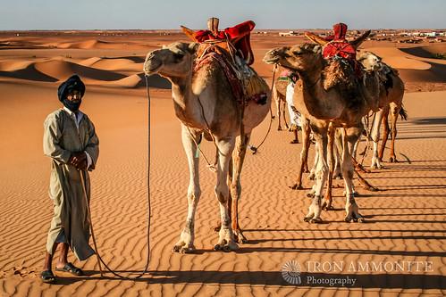 africa people sahara dunes favourite camels mauritania mauretania chinguetti adrar