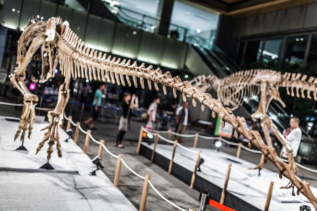 20130828_03_大恐竜展 in 丸の内 2013 ~福井県恐竜博物館コレクション~