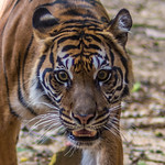2013-08-31_Dallas-Zoo-2808-2