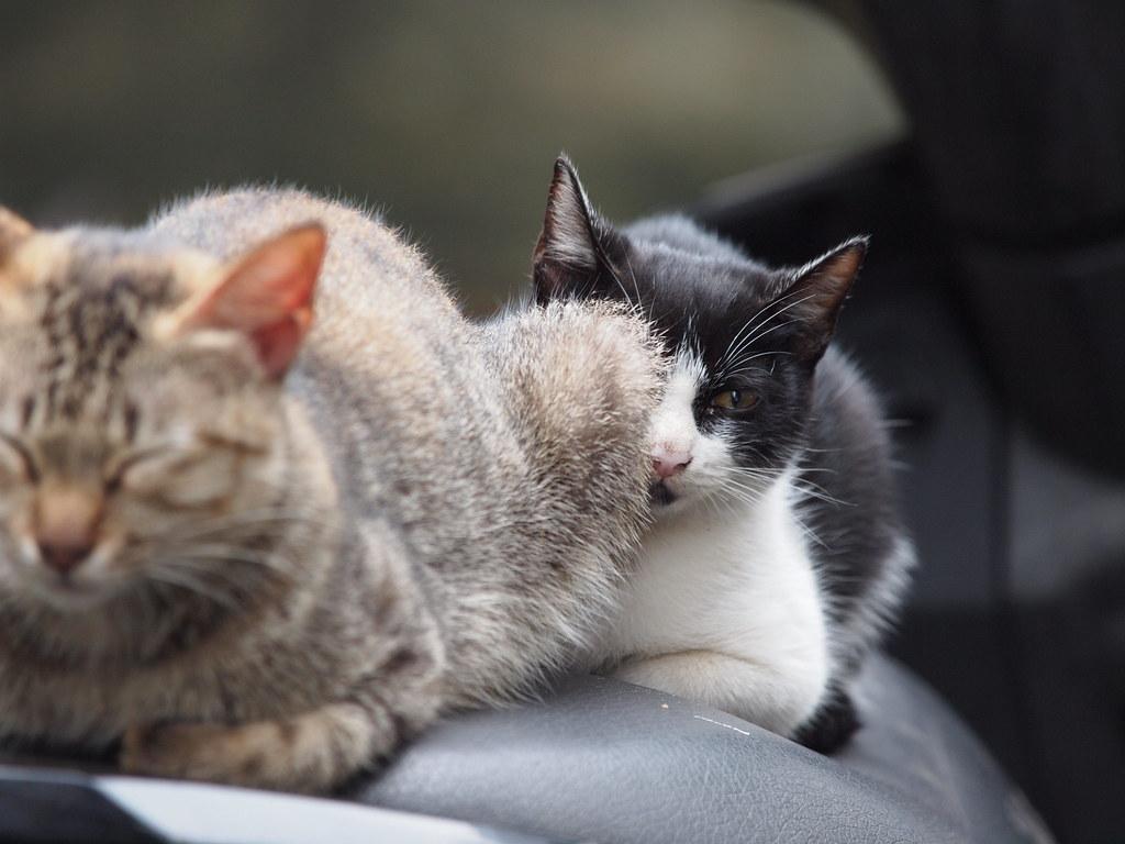 壁纸 动物 猫 猫咪 小猫 桌面 1024_768