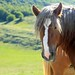 horse on Campo Felice by peet-astn