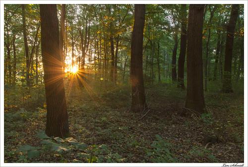 backlight forest sunrise herbst natur 09 sonne wald sonnenaufgang hitech gegenlicht ndgrad schlotheim 09se tamron1024mmf3545spdiiildaslif