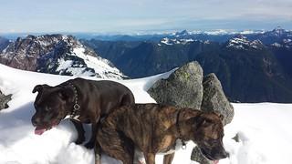 Dogs on Vesper
