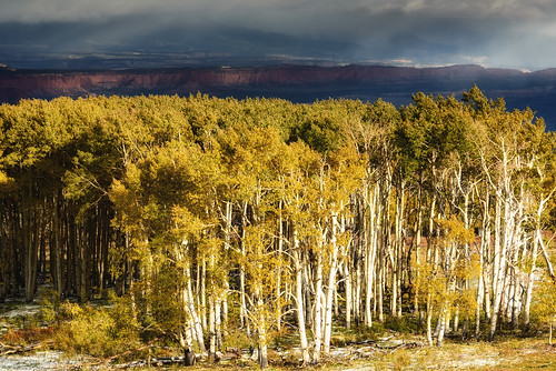Aspens and Capitol Reef from Larb Hollow