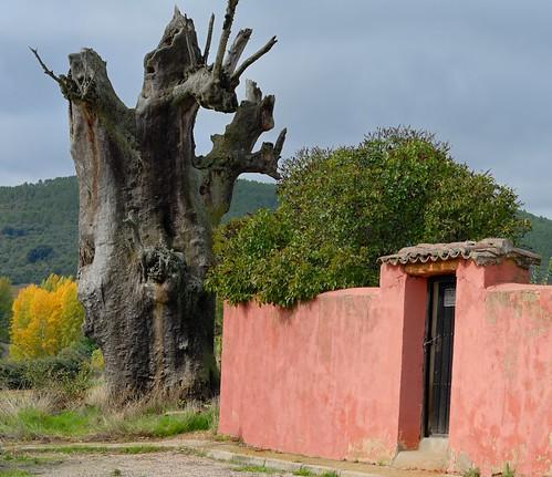 La Mierla - Árbol seco y cementerio