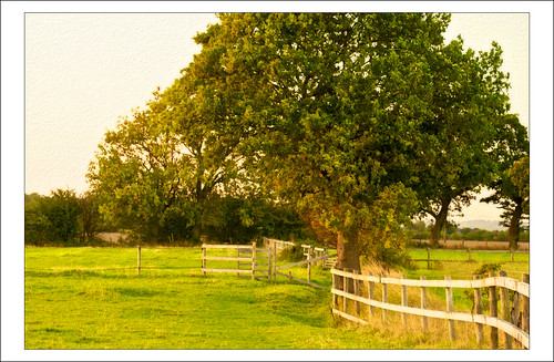 trees light sunset england sun painterly art nature rural painting evening landscapes countryside colours cheshire farm farming fences farmland fencing goldenhour textured hff culcheth applecrypt