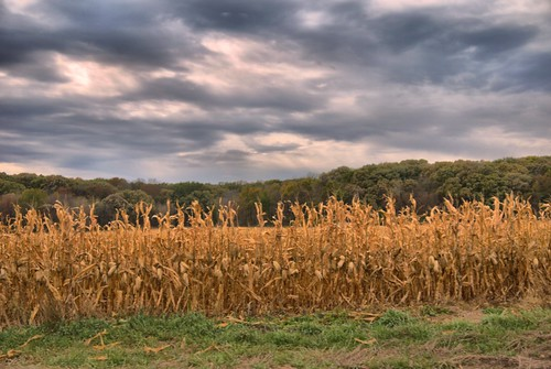 fall corn cloudy iowa fromtheroad gf1 views100