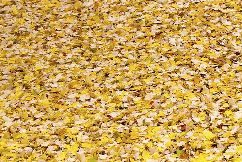 11-13 fall-9514-Edit-18