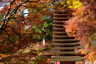 Autumnal leaves and 13-storied pagoda of Tanzan Sinto Shrine.