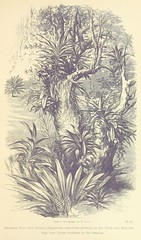 """British Library digitised image from page 217 of """"Three visits to Madagascar during the years 1853-1854-1856 ... Illustrated by woodcuts from photographs, etc"""""""